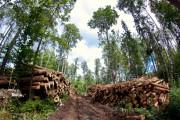 Разработка лесосек с сохранением подроста