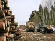 На территории Республики Коми формируется лесопромышленный кластер