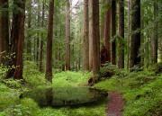Канада пересмотрела стандарт ведения лесного хозяйства.