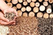 Рынок древесных топливных гранул пересечет отметку в 20 миллиардов долларов США к 2023 году.