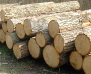 Экспорт лиственных лесоматериалов из Беларуси будет проходить лицензирование