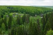 Суд обязал Минприроды Коми реализовать лесоустройство в Сосногорском лесничестве