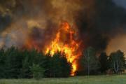 В лесах Смоленщины стартовал пожароопасный сезон