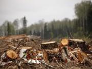 В Свердловском регионе привлекли к ответственности нарушителей