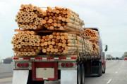 В Новгородской области пойманы 9 нарушителей, совершавших незаконную транспортировку леса